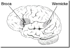 Broca wernicke areas